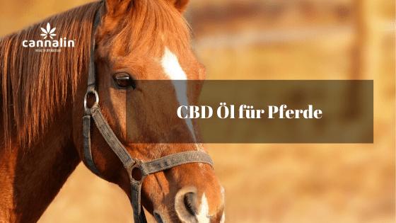 CBD für Pferde