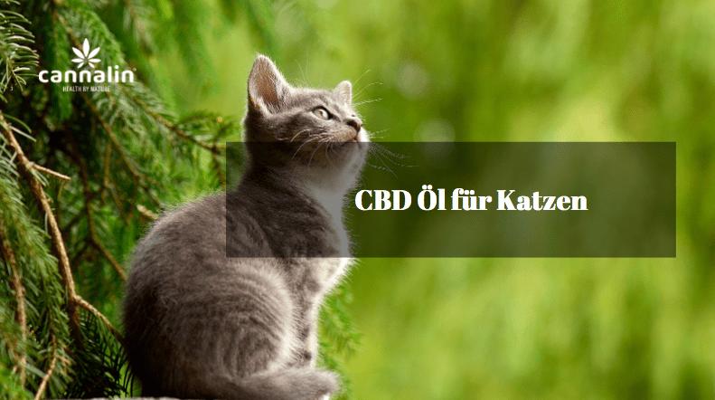 CBD für Katzen kaufen